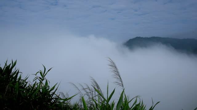霧の上に流れるような山々、多くの名様まで収容可能です。 - 自然旅行点の映像素材/bロール