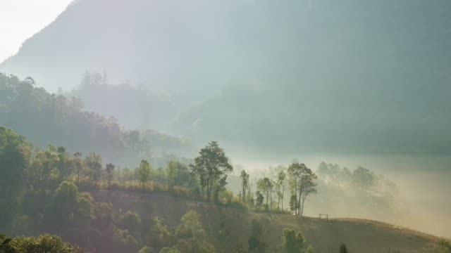 Fog Rolls Across Flowing over Tropical Mountains in the Morning