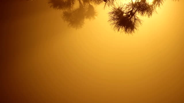 fog scene,night video