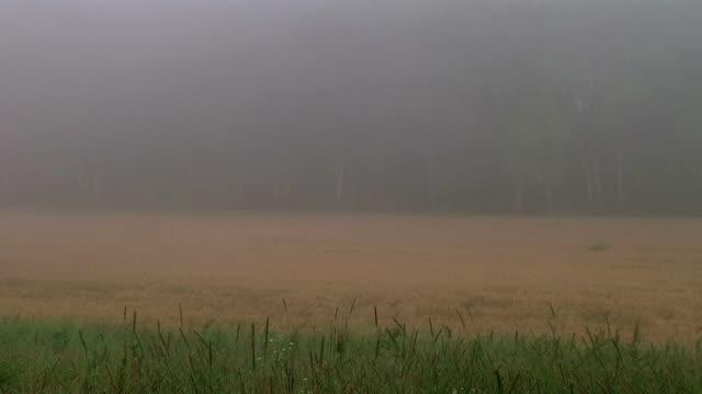 Fog Time Lapse video