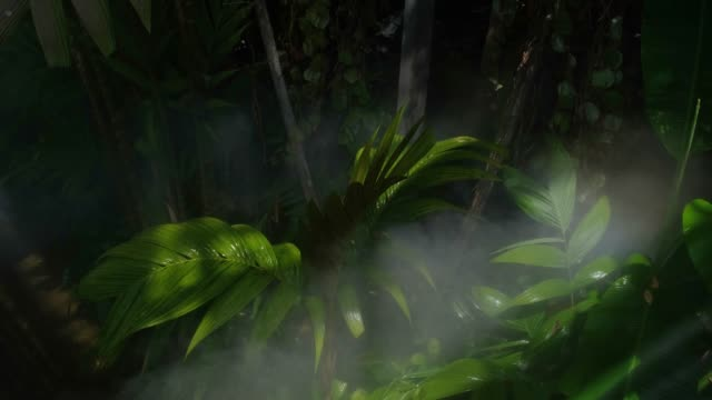 Fog water or mist spray nozzle setup on tree for watering plant