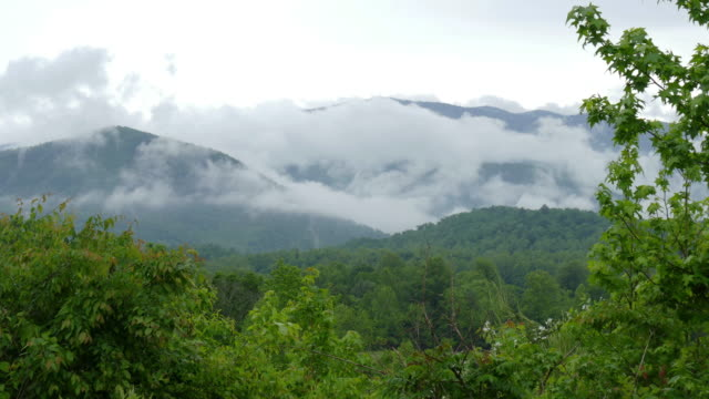 Foggy clouds drift Great Smoky Mountains National Park Tennessee video