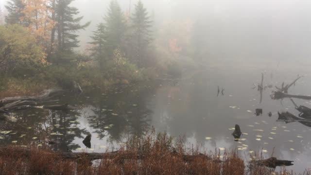 vídeos de stock, filmes e b-roll de dia de neblina no lago solitude em new hampshire. - nordeste