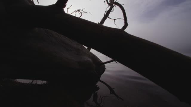 Foggy dramatic scene looking past a dead tree across Swan Lake in Montana