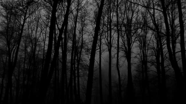 Foggy Forest at Dusk- Mountains So Ca video