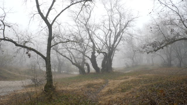Foggy forest or park autumn landscape panorama