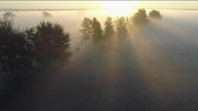 foggy sunrise in countryside. sun rays break through the trees. aerial drone shot - trees in mist stock videos & royalty-free footage