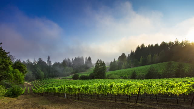 Foggy Sunset at California Winery - Time Lapse video