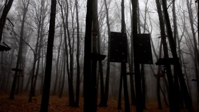 stockvideo's en b-roll-footage met mistige bomen in een bos - blue sky