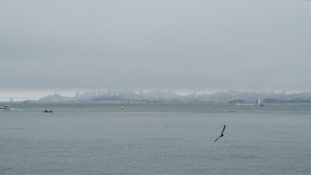Foggy view of San Francisco skyline and San Francisco Oakland Bay Bridge with boats and birds