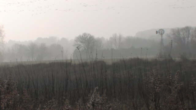 Foggy Windmill with Flock of Birds 1 HD video