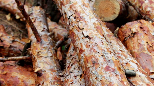Folded trees on the ground close up.The problem of deforestation.Huge logs from felled trees lie in forest on ground.Stump from newly felled tree Folded trees on the ground close up.The problem of deforestation.Huge logs from felled trees lie in the forest on ground.Stump from newly felled tree handbook stock videos & royalty-free footage