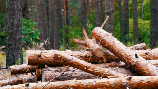 folding logs felled into a heap - молодой картофель стоковые видео и кадры b-roll