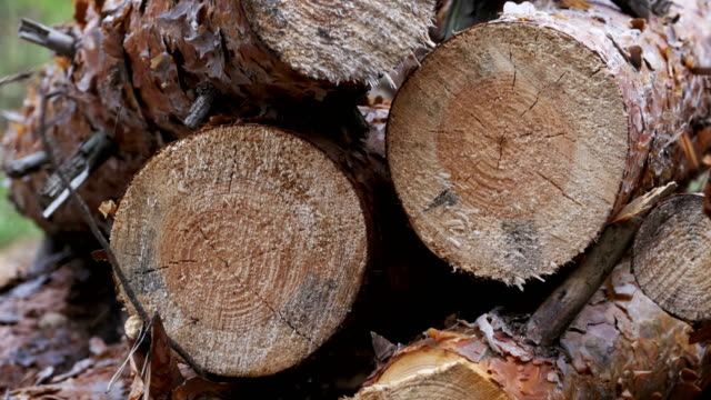 Folding logs felled into a heap Folding logs felled into a heap. Felled Tree Trunks in the Forest. The felled trees fall on a pile of firewood. Cut logs are stacked in a forest. Still summer forest around. firewood stock videos & royalty-free footage