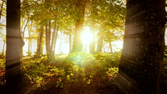 木の幹と晴天秋草地での葉。 - 木漏れ日点の映像素材/bロール