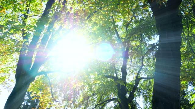 自然の紅葉の下での紅葉。日光に照らされて戻る。 - 木漏れ日点の映像素材/bロール