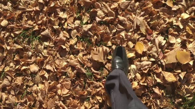 Foliage Walk Slow Motion video