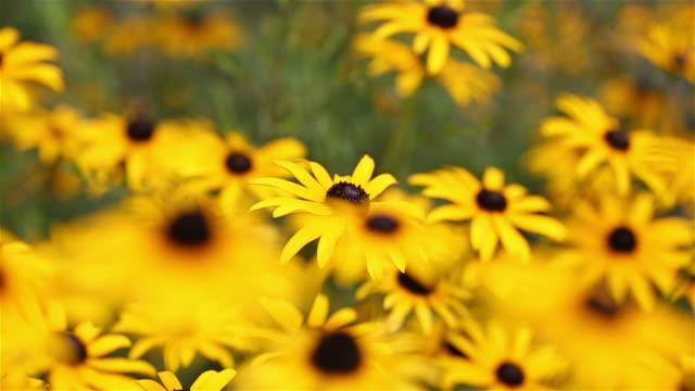 Follow Bee Left