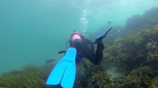Following a Diver HD video