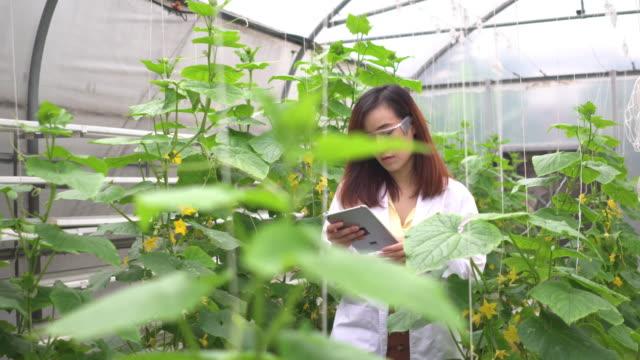 aşağıdaki yan görünüm: bilim adamı kavun ağacını inceler ve dijital tablette veri toplama - plant stem stok videoları ve detay görüntü çekimi