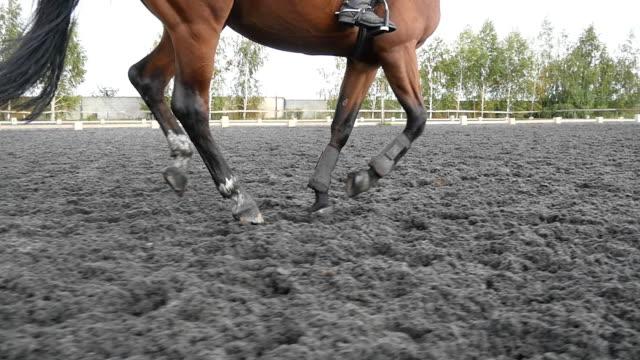 vidéos et rushes de suite pour les pieds du cheval courir sur le sable. gros plan des pieds de l'étalon au galop sur le terrain boueux humide. slow motion - dressage équestre