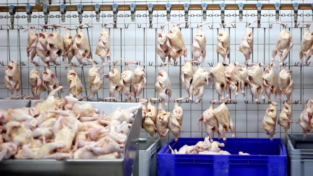 Food industry, chicken meat video