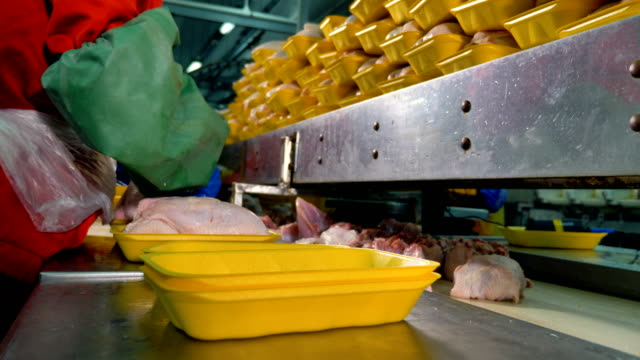 Food processing factory. Gloved workers hands choose and pack chicken breasts. video