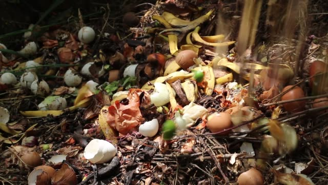 Food scraps compost heap. Recycles kitchen and yard waste. Home composting video