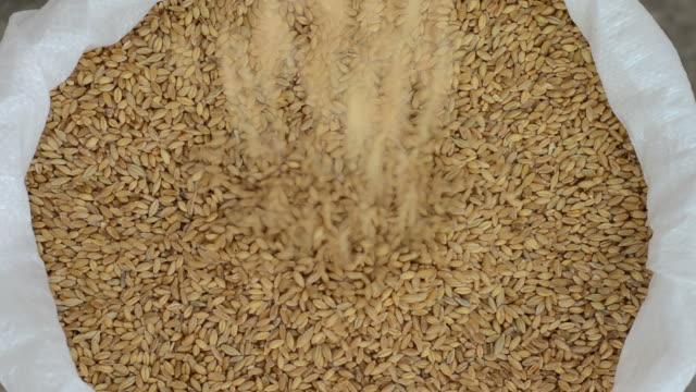 Food Wheat sack is getting full. rye grain stock videos & royalty-free footage