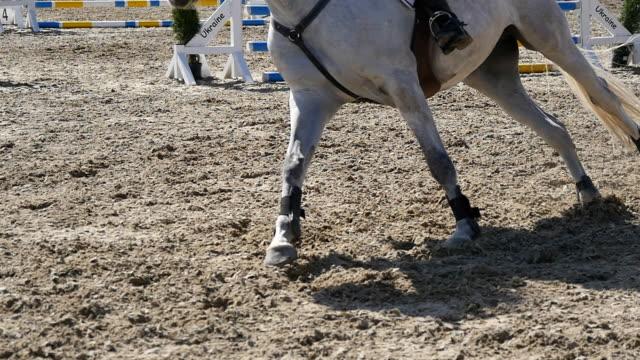 foten av häst springandes på sanden. närbild av ben hingsten galopperande på våta leriga marken. slow motion - hästhoppning bildbanksvideor och videomaterial från bakom kulisserna
