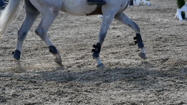 vidéos et rushes de pied de cheval courir sur le sable. gros plan des pieds de l'étalon au galop sur le terrain boueux humide. slow motion - dressage équestre
