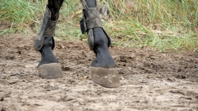 Foot of horse walking on mud. Close up of legs walking kicking up the wet muddy ground. Slow motion