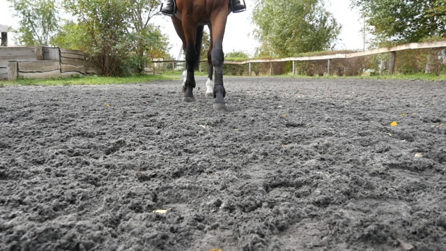 Foot of horse walking on the sand. Close up of legs going on the wet muddy ground at manege at farm. Following for stallion. Close up Slow motion Front view Foot of horse walking on the sand. Close up of legs going on the wet muddy ground at manege at farm. Following for stallion. Close up Slow motion Front view paddock stock videos & royalty-free footage