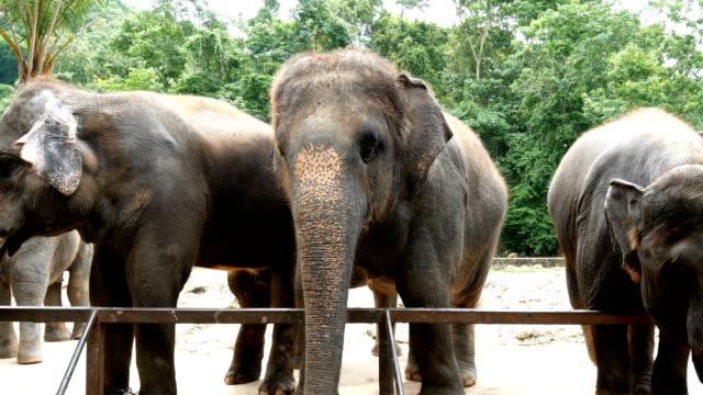 4k filmmaterial. gruppe der asiatischen elefanten im zoo - zoo stock-videos und b-roll-filmmaterial