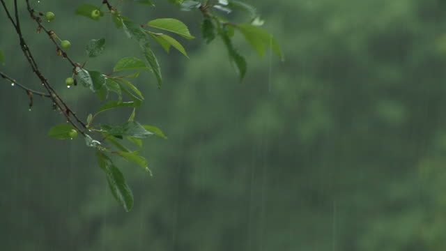 Footage of a  close-up on leaves in heavy rain. video