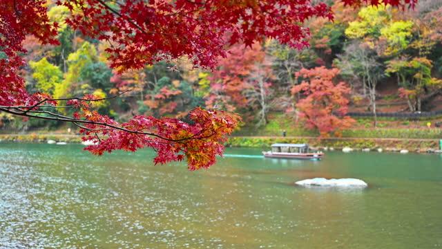 Footage of Autumn scene in Arashiyama boating in katsura river in Kyoto Japan