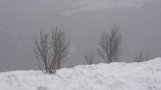 4K Footage of Beautiful winter landscape with snow covered trees. video