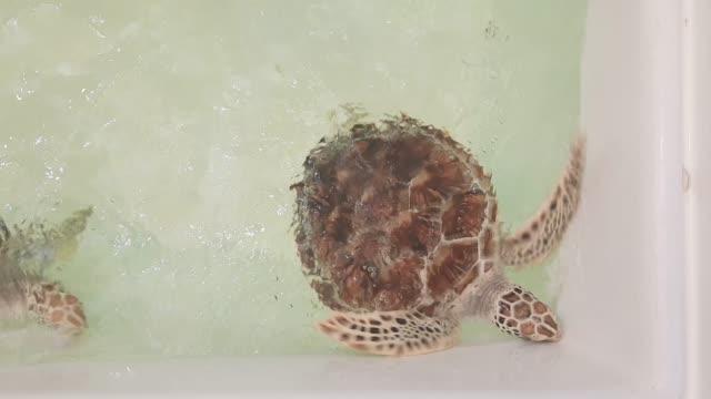 Footage of Loggerhead Sea Turtle in Water