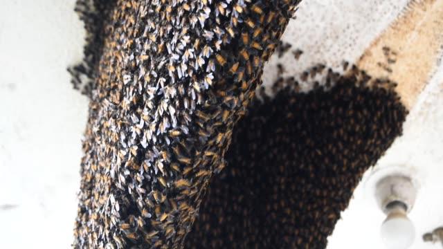 ein filmmaterial von natürlichen bienenstöcken mit geringer schärfentiefe auf dem balkon. - hornisse stock-videos und b-roll-filmmaterial