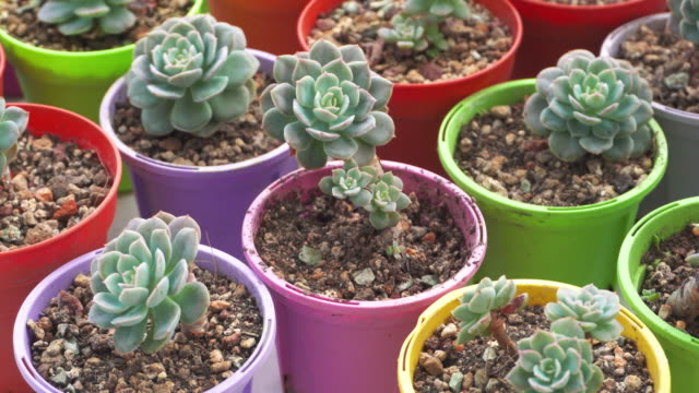 4K footage of Natural potted houseplants on windowsill, green home plants and succulents
