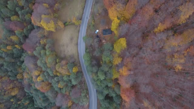 vídeos de stock e filmes b-roll de footage of road through autumnal forest in a plateau of trabzon, aerial view. - conífera