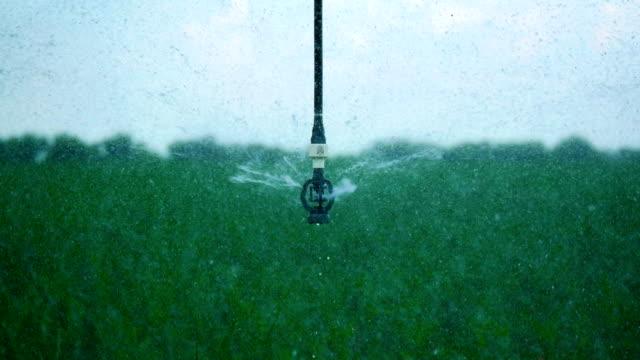 4k filmmaterial. gießen das kornfeld mit einer sprinkleranlage. automatisches bewässerungssystem. close up - bewässerungsanlage stock-videos und b-roll-filmmaterial