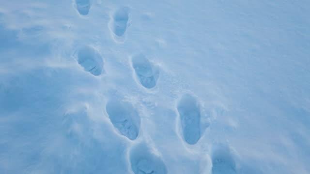 impronta 4k passo a piedi sulla neve - traccia video stock e b–roll