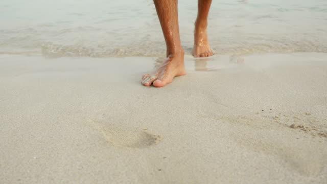 impronte nella sabbia. - arto inferiore animale video stock e b–roll