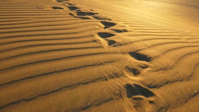 fotspår på sand av sanddyner i öknen under kvällen. steadicam skott, 4k - sand bildbanksvideor och videomaterial från bakom kulisserna