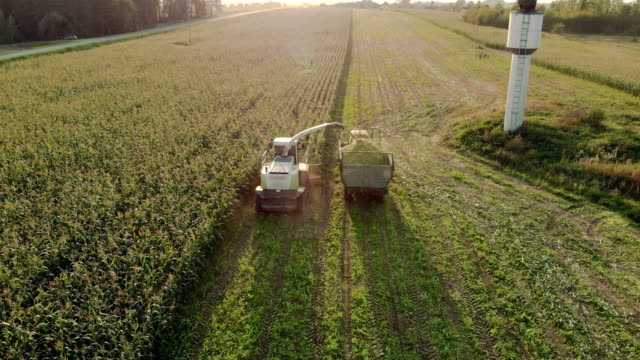 A forage harvester cuts corn into silage and refills a tractor trailer on a sunny day