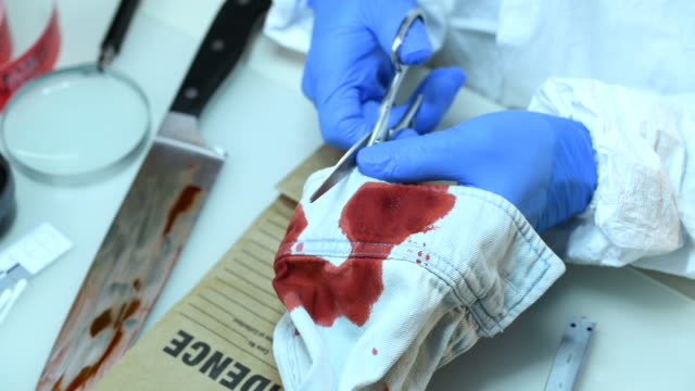 Forensic scientist working in laboratory Senior forensic scientist doing blood test in laboratory crime scene stock videos & royalty-free footage