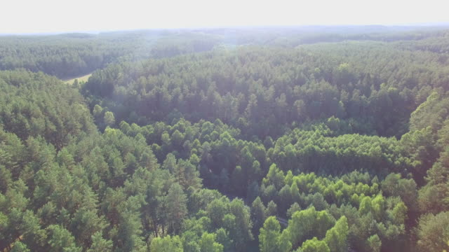 Forest 360 degree spiral camera movement video