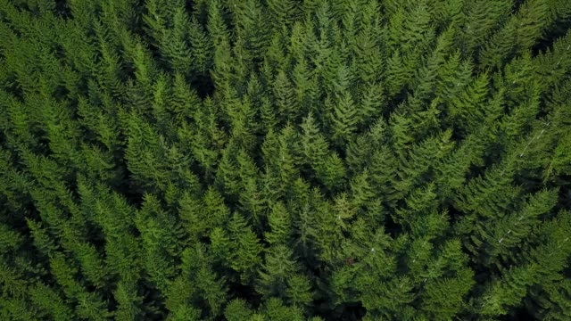 forest aerial - trees in mist stock videos & royalty-free footage