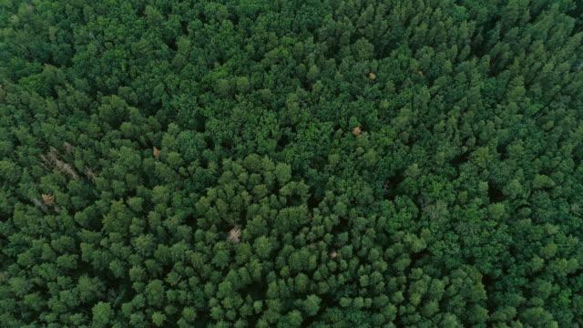 vídeos de stock e filmes b-roll de forest aerial view green pine spruce flyover trees - green world